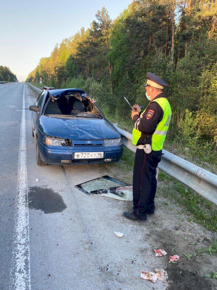 В Свердловской области в ДТП с лосем пострадали 4 человека