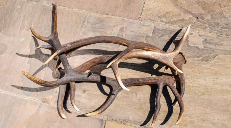 Власти ЯНАО предлагают ввести госрегулирование оборота рогов оленей
