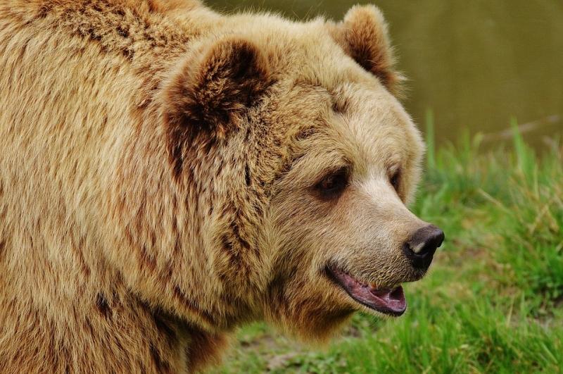 ВТроицке приняли решение разобраться смужчиной, выгуливающим медведя вцентре
