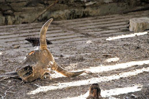 ВПрикамье обнаружили два бесхозных скотомогильника ссибирской язвой