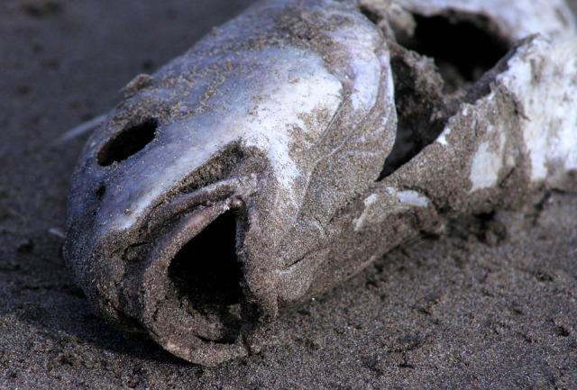ВВерхней Сысерти— массовая смерть рыбы
