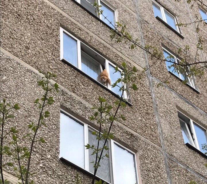 Погиб кот в окне