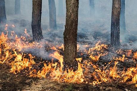 ВЯНАО засутки появилось 22 новых пожара