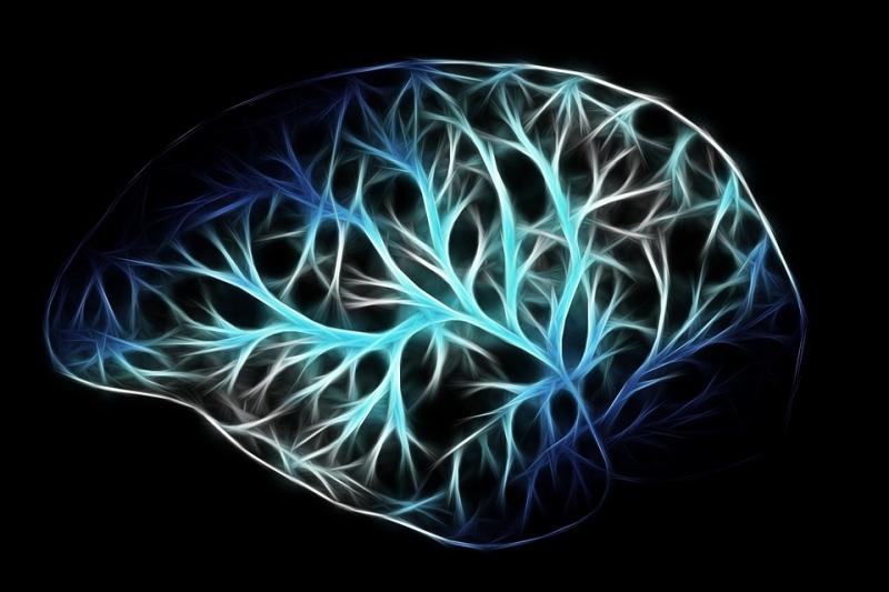 ВСША мед. сотрудники изучили мозг стрелка изЛас-Вегаса
