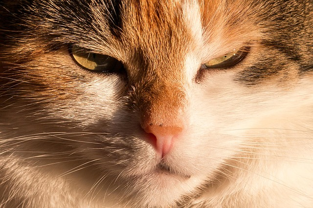 Пермский кот-строитель Барсик вполне может стать главным котиком страны