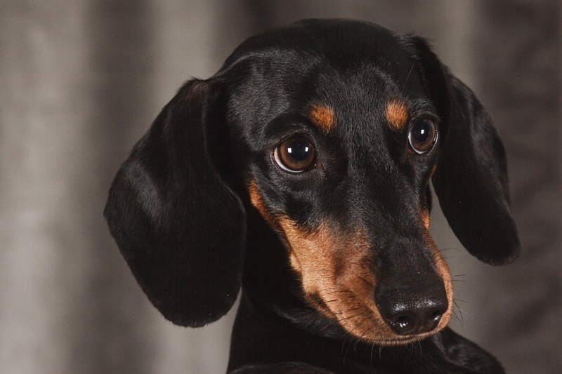 Гражданин  Перми задушил собаку ивыкинул еевокно