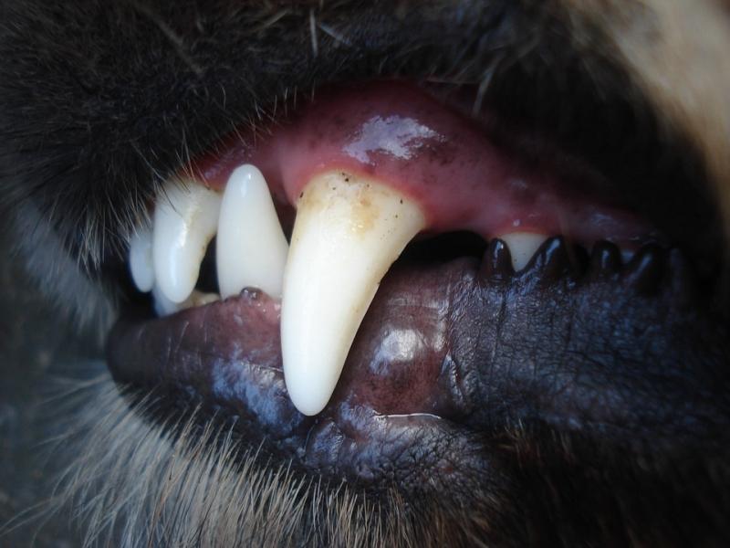 НаСреднем Урале пенсионер скончался в итоге нападения собаки