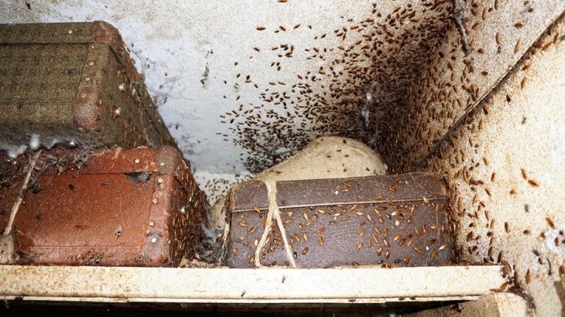 Жительница Екатеринбурга превратила квартиру впомойку стысячами тараканов