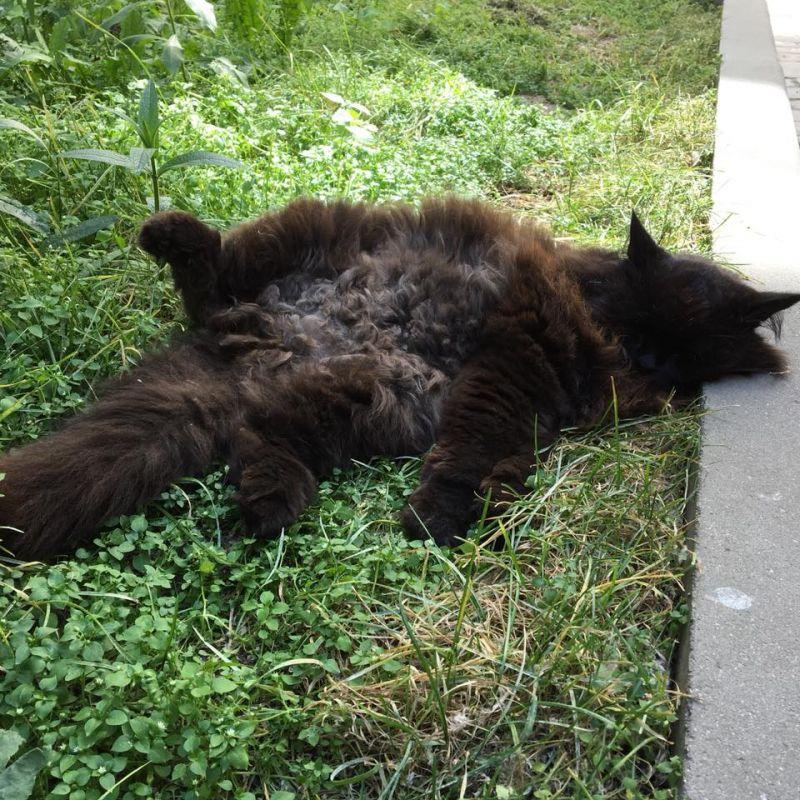 «Онвесь вколтунах». Похитительница кота Бегемота пояснила собственный поступок