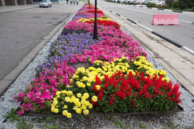 Какие цветы на улицах сажают